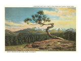 Lonesome Pine, Longs Peak, Colorado Posters