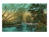 Arawana Stream, Middletown, Connecticut Print