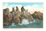 Seals at Catalina Island, California Posters