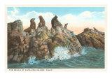 Seals at Catalina Island, California Poster