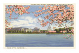 Cherry Blossoms, Capitol, Washington D.C. Posters