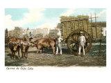 Sugar Cane Cart, Cuba Poster