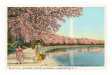 Japanese Children, Cherry Blossoms, Washington D.C. Print