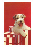 Wire-Haired Terrier Puppy Poster