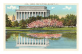 Lincoln Memorial, Cherry Blossoms, Washington D.C. Photo