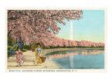 Petites filles japonaises, cerisiers en fleurs, Washington DC Posters