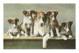 Family of Collies Posters