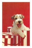 Wire-Haired Terrier Puppy Posters
