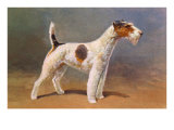 Wire-Haired Terrier Posters