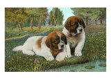 St. Bernard Puppies Poster