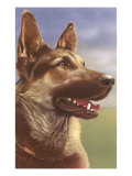 German Shepherd Head Print
