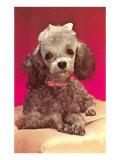 Poodle Pup Print