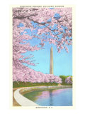 Cherry Blossoms, Washington Monument, Washington D.C. Posters
