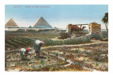 Farming by the Nile, Pyramids, Egypt Poster