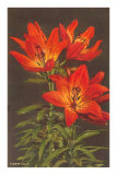 Tiger Lily Posters