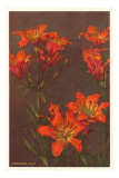 Orange Tiger Lilies Posters