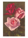 Roses rouges et roses Posters