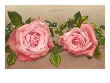 Katherine Mermet Pink Roses Posters