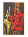 Gladiolus Posters