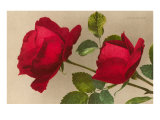 Roses rouges Ulrich Bruner Posters