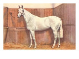 White Horse in Stall Posters