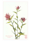 Indian Paint Brush Print