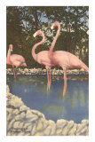 Flamingos, Florida Posters