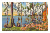 Cypress Trees, Florida Photo