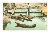 Alligator Joe, Palm Beach, Florida Photo