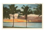 Sunset, Palm Trees, Florida Poster