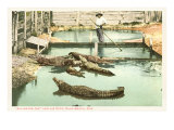 Alligator Joe, Palm Beach, Florida Posters