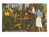 Macaws, Florida Print
