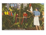 Macaws, Florida Stampa
