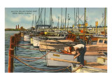 Fishing Fleet, Miami Beach, Florida Posters