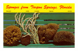 Sponges from Tarpon Springs, Florida Posters