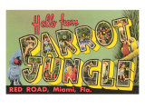 Hello from Parrot Jungle, Miami, Florida Print