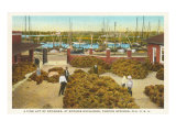 Piles of Sponges, Tarpon Springs, Florida Posters