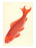 Reddish Orange Koi Posters
