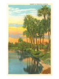 Sunset, Palm Trees, Florida Posters