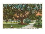 Old Oak, Tampa, Florida Poster