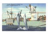 Jumping Porpoises, Marineland, Florida Poster