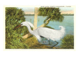 Snowy Egret, Florida Posters