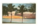 Sunset, Palm Trees, Florida Poster