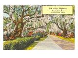 Tomoka State Park, Daytona Beach, Florida Posters