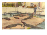 Alligator Farm, Miami, Florida Poster