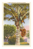 Coconut Palm Posters