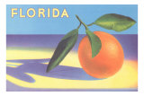 Florida Orange Prints