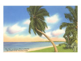 Palm Trees, Florida Posters