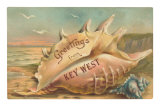 Greetings from Key West, Conch Shell Print