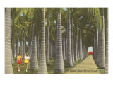 Royal Palms, Florida Posters